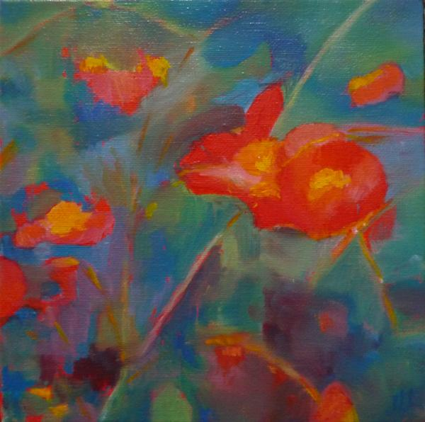 Coquelicots - Huile 20 x 20