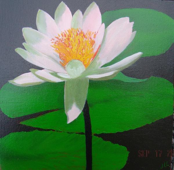 Série fleur2 - Huile 40 x40